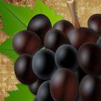 MARTINJE – photoshop styles + najoriginalnije dizajnirane etikete za vina