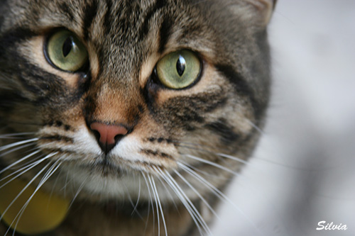 portret maca