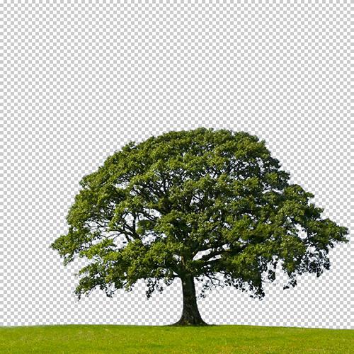 """pomoću """"blend if"""" maskinga uklonjeno je nebo sa slike"""