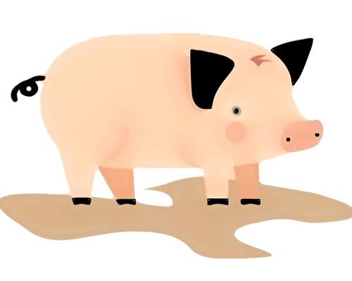 vector popart pig